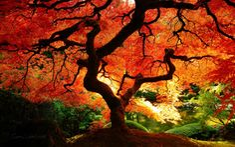 Fall!*