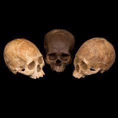 installation skulls, chocolates, dark chocol, bone, chocol mould, lifes chocol, delici chocol, chocol scull, chocol skull