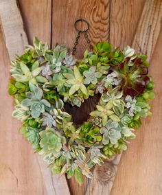 Succulent Heart Wreath Succulent Wreath by WindmillFloralDesign