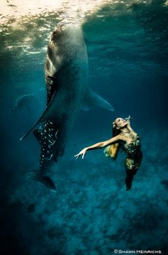 Whale Shark: Stunning photos of models swimming with sharks raise awareness for their conservation Photo: Shawn Heinrichs