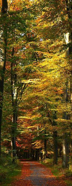 Stunning Autumn Path