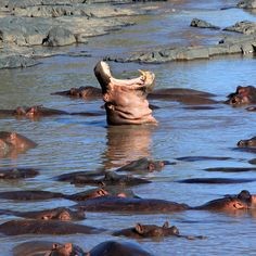 Hippo Pool, Serengeti National Park, Tanzania.