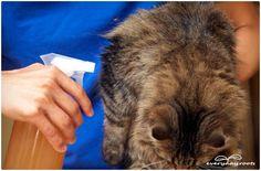 natural flea remedies for cats