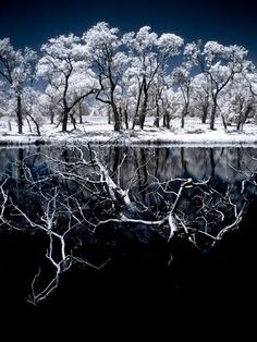 Frost Reflection