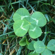 4 leaf :)