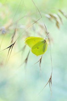 Butterfly © Magda Wasiczek