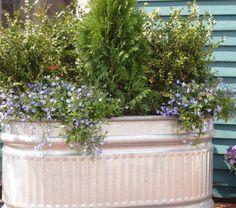 Horse trough planter!