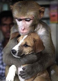 more monkey love