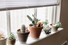 window cacti.