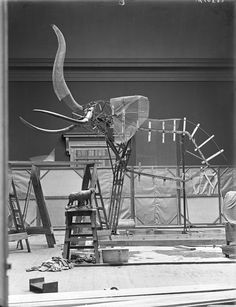 Preparing the Armature for the Elephant, American Museum of Natural History