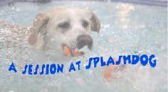 Splash Dog Spa