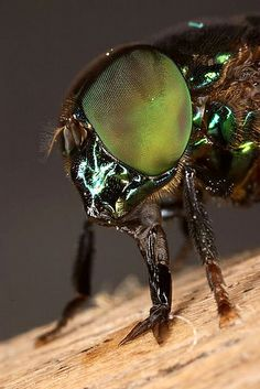Portrait of a fly