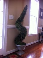DIY spiral topiary - needs a little more spiral though! ;)