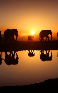 Elephants in Sunrise (by Fifters).
