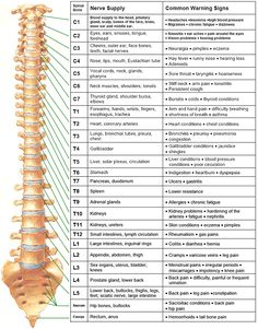 Your nervous system is an extensive network that channels nerve impulses from your brain to virtually every cell that makes up your body.  This chart shows some of the integral relationships between the spine, nervous system and the body.