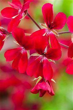Sarah Raven's top indoor plants