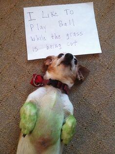 Bullitt!