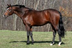 beauti thoroughbr, horse pictures, thouroughbred horse, gorgeous bay, bays, thoroughbr hors, horse breeds, custom blanket, bay thoroughbr