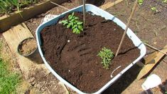 Grow Tomatoes in 18 Gallon Containers! Preparing the Soil & Egg Shells...
