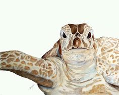 Wise Old Turtle by Trish Doty