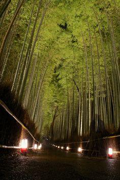 Bamboo forest illumination - Arashiyama Hanatouro, Kyoto, Japan