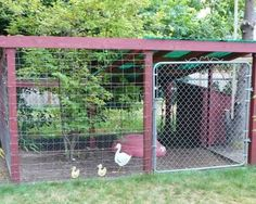 Duck pen with shelter