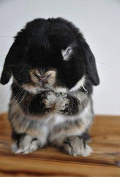 bunny, haha