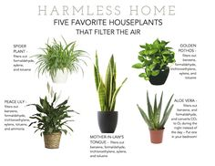 5 Favorite houseplants that filter the air. Perfect for the pop of green that will be in the living room.