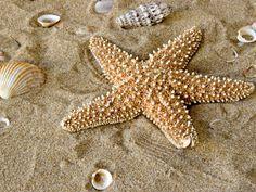 Starfish ...