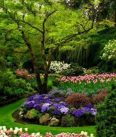 Garden Design Ideas - featuring many different garden styles.