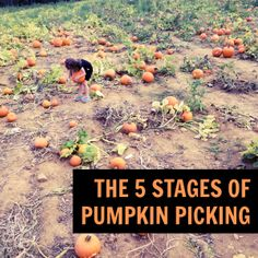 The 5 Stages of Pumpkin Picking by Kim Bongiorno #fall #kids #humor