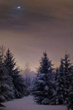 Winter Moonscape (credit) compel ambienc