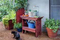 Splish splash--give fruits and veggies a bath! Build this DIY outdoor sink, and you'll have a spot to wash the dirt off your hands as well as your freshly harvested foods. Click through for details from @Bonnie Plants.