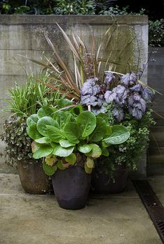 Garden Tips: Secret Formula for Grouping Plants in a Pot