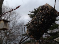 The old pinecone birdfeeder gets modern using a bathroom paper roll.