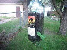 Wine bottle plant holder with strawberry plant.