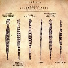 Common Venomous Snakes of the South...