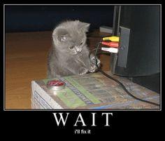 helpful kitten is helpful