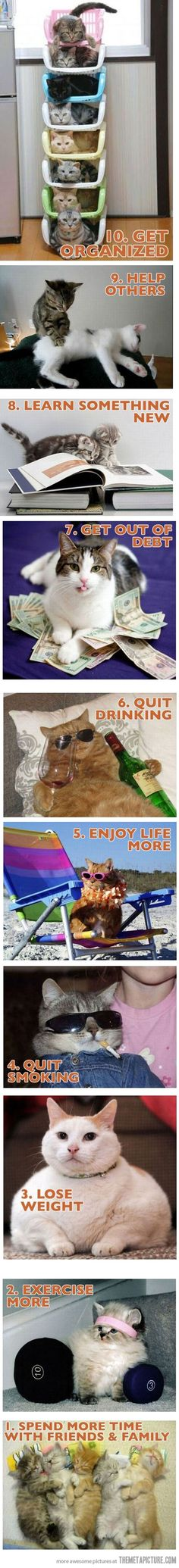 New year resolutions with cats