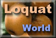 LOQUAT RECIPES from Loquat World - go figure they'd have a bunch!
