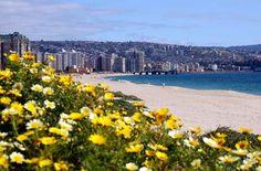 Fotos de Viña del Mar: Paisajes y Fotografías de Chile Central