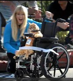 Nick Swardson presents Wheelchair Cat: Trust Fund Kitty