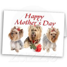 Mother  Day Yorkies Cards