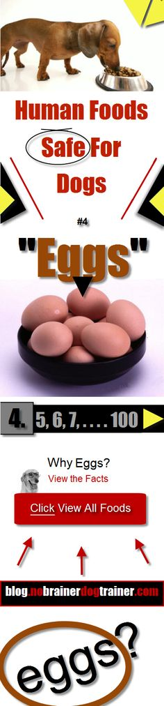 Eggs are another Human Foods Safe For Dogs. Who would have thought? Find out some cool quick ways to feed your dog EGGS Today. Go To: http://blog.nobrainerdogtrainer.info/dogs-nutrition/human-foods-safe-for-dogs/