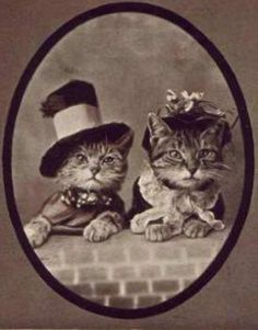 old time photo with the kitties
