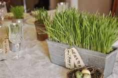 How to Grow Your Own Easter Grass - It is a fun way to add some seasonal decor to the house and the Easter dinner/brunch table.  It's simple, easy and inexpensive to do but you do need to plan ahead as it takes about 2 weeks.  Besides being a fun way to decorate for Easter it also makes a nice gift to give to friends or neighbors.