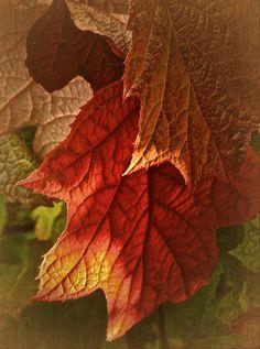 ✯ Autumn Leaves