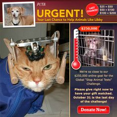 """Support PETA's Global """"Stop Animal Tests"""" Challenge to save animals from horrific experiments! Donate today & your gift will be DOUBLED."""