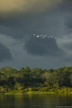 Amazon landscape, Colombia