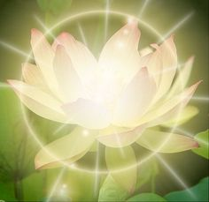 The beautiful Lotus Flower - symbol of healing energy for so many :)  wellness  spirituality